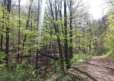 Lesní cesta Kroucená - ukázka zatáčky
