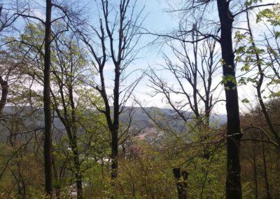 Lesní cesta Kroucená - výhled na Adamov