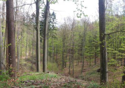Lesní cesta Kroucená - výhledy do údolí