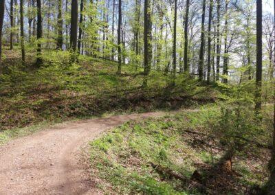 Lesní cesta Kroucená - začátek / konec při lesní cestě Coufavá