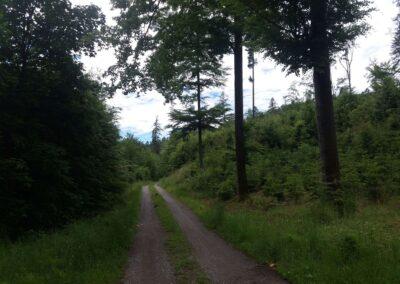 Lesní cesta Lámanka