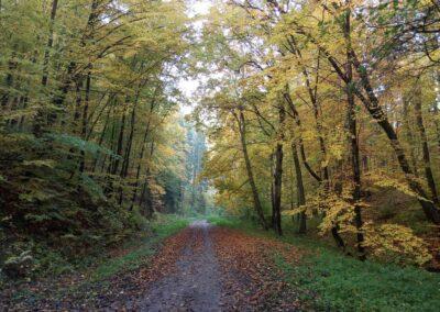Podzimní lesní cesta Melatín