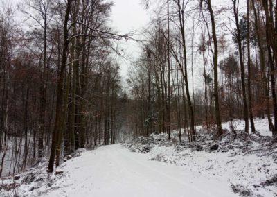 Lesní cesta Melatín - severní začátek / konec cesty v zimě