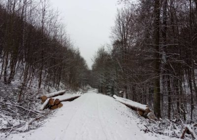 Lesní cesta Melatín v zimě