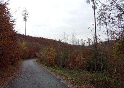 Lesní cesta Padouch