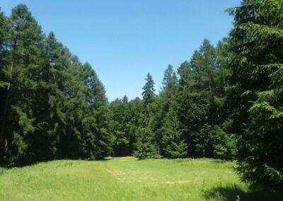 Lesní cesta Padouch - další louka u cesty