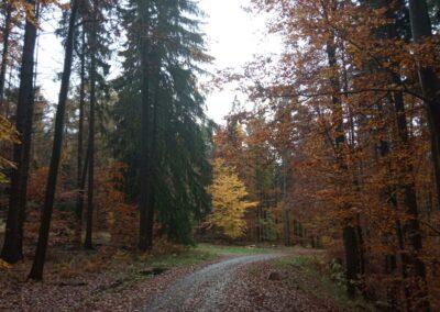 Lesní cesta Padouch - palouk u cesty