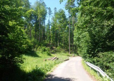 Lesní cesta Padouch v létě