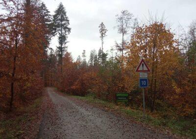 Lesní cesta Padouch - začátek / konec u lesní cesty K Hlinkovým dolům