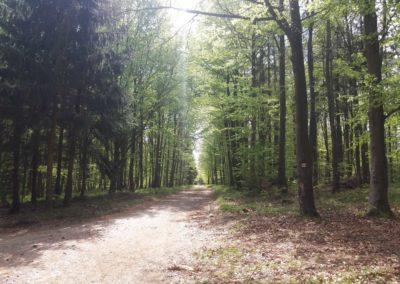 Lesní cesta Palaška - pohled na cestu