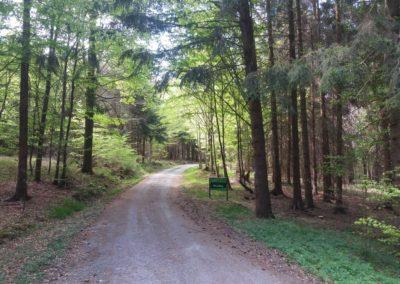 Lesní cesta Palaška - horní začátek / konec
