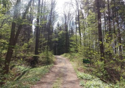 Lesní cesta Palaška - začátek / konec u arboreta Křtiny