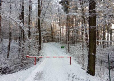 Lesní cesta Palaška - začátek / konec u křtinského arboreta v zimě