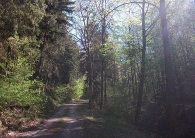 Lesní cesta Pod Jelencem - náročné závěrečné stoupání