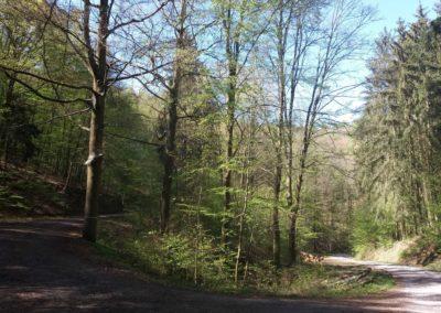 Lesní cesta Pod Jelencem - rozcestí s lesní cestou Barbora