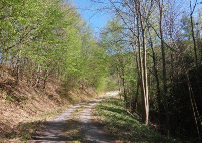 Lesní cesta Pod Jelencem - úsek od vyhlídky na Adamov