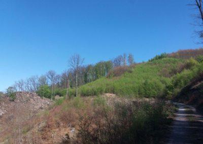 Lesní cesta Pod Jelencem - úsek po těžbě