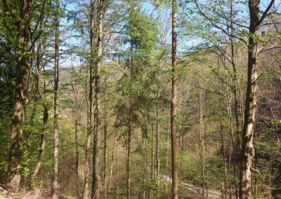 Lesní cesta Pod Jelencem - vyhlídka na lesní cestu Barbora