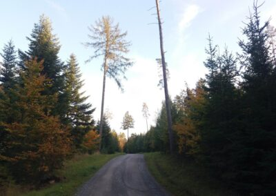 Lesní cesta Pokojná