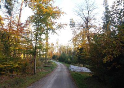 Lesní cesta Pokojná v podzimních barvách