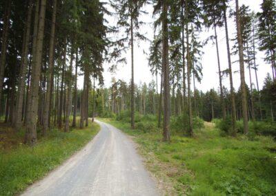 Lesní cesta Pokojná v létě