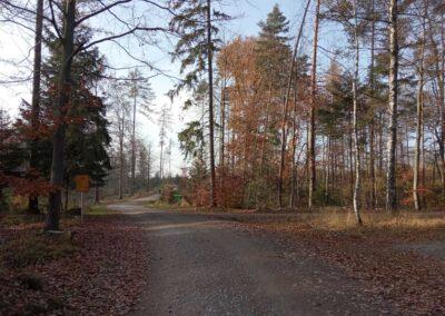 Lesní cesta Pokojná - začátek / konec na křižovatce s lesní cestou K Hlinkovým dolům