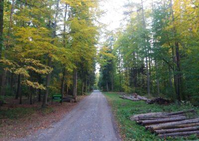 Lesní cesta Pokojná - začátek / konec při silnici Olomučany - Rudice