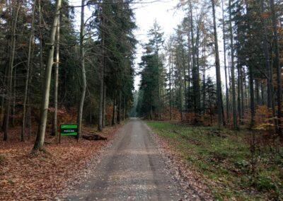 Lesní cesta Pokojná - podzimní začátek / konec při silnici Olomučany - Rudice