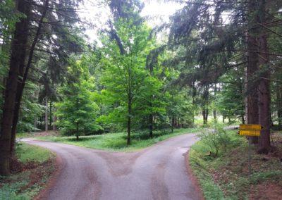 Lesní cesta Proklest - křižovatka s lesní cestou Schindlerovou