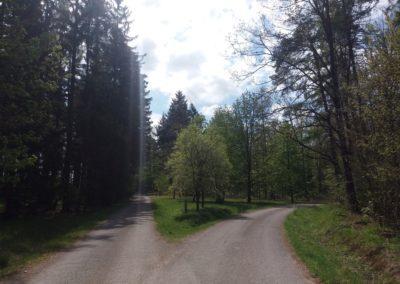 Lesní cesta Proklest - křižovatka s lesní cestou Blatiny