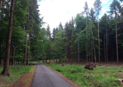 Lesní cesta Proklest - pohled na odlesněnou část
