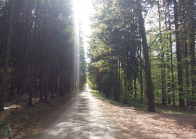 Lesní cesta Proklest - pohled na les