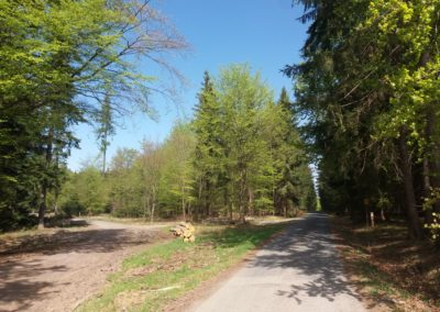 Lesní cesta Proklest - začátek černého trailu (odbočení doleva)