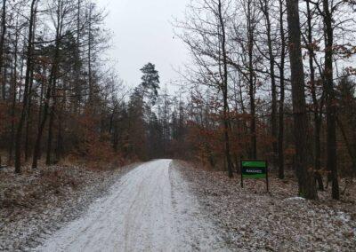 Lesní cesta Rakovec - severní začátek / konec v zimě