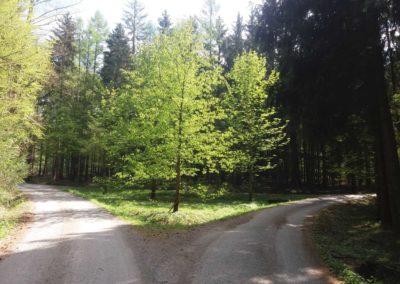 Lesní cesta Schindlerova - pohled na palouk při lesní cestě Proklest