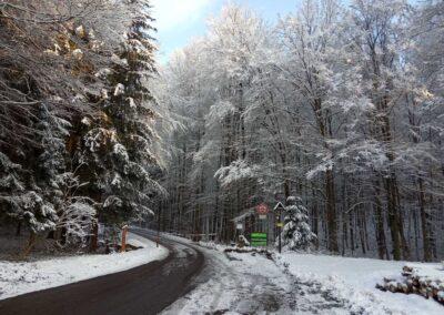 Lesní cesta Schindlerova - začátek / konec u křtinského arboreta v zimě