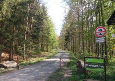 Lesní cesta Schindlerova - začátek / konec u křtinského arboreta