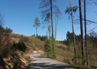 Lesní cesta Šíbrnka