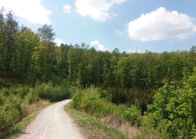 Lesní cesta Šumbera - pohled na řešení cesty