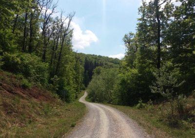 Lesní cesta Šumbera - prudší klesání, vlevo pro protisměr značka omezující rychlost