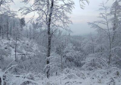 Lesní cesta Šumbera v zimě, autor Martin Šerák