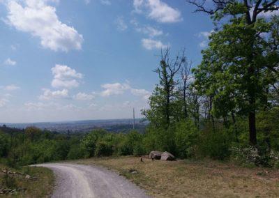 Lesní cesta Šumbera - výhled na Brno