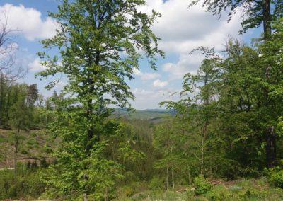 Lesní cesta Šumbera - výhledy do krajiny v severní části cesty