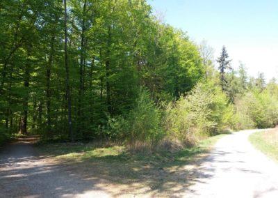 Lesní cesta Šutrovaná - odbočení k Alexandrovce