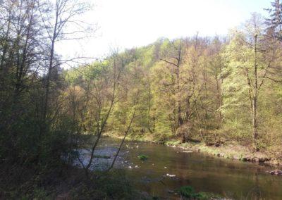 Lesní cesta Svitavská - divočejší část řeky Svitavy v údolí