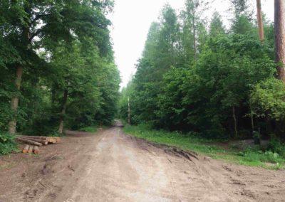Začátek lesní cesty Vojanka na jihu u Bílovic nad Svitavou