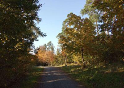 Podzimní lesní cesta Vojanka