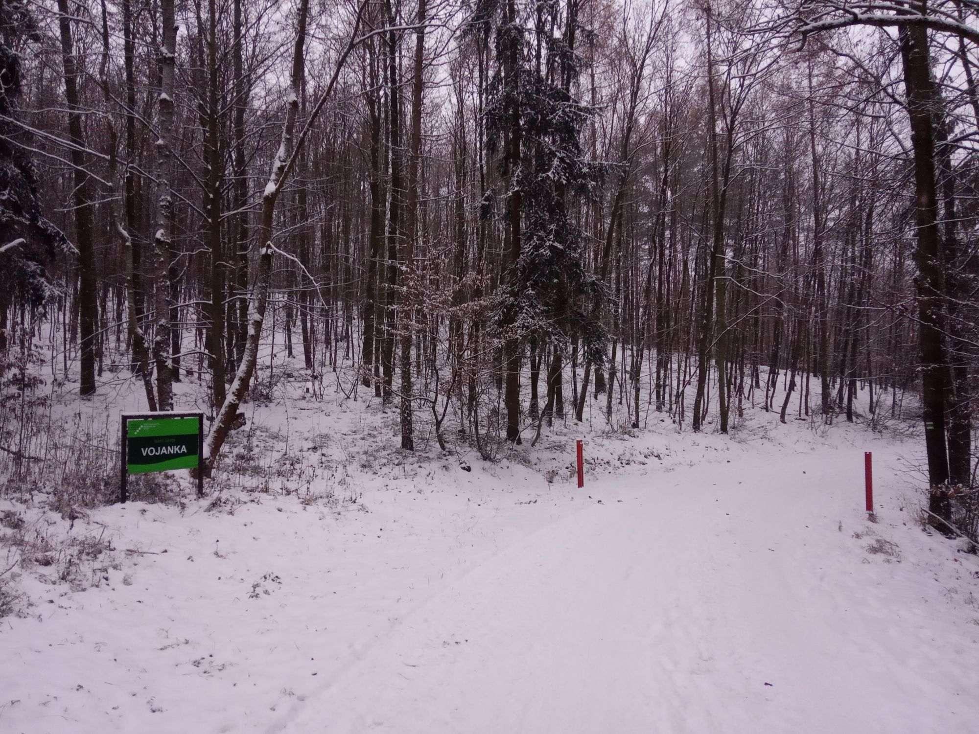 Začátek lesní cesty Vojanka na severu nedaleko Útěchova