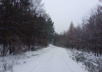 Lesní cesta Vojanka v zimě