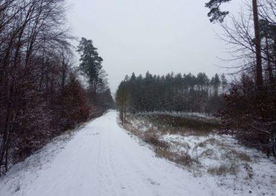 Lesní cesta Vojanka - výsadba v zimě